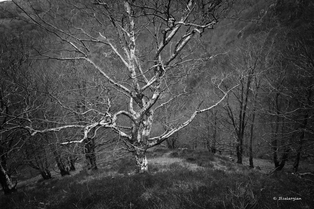 arbre 3_43