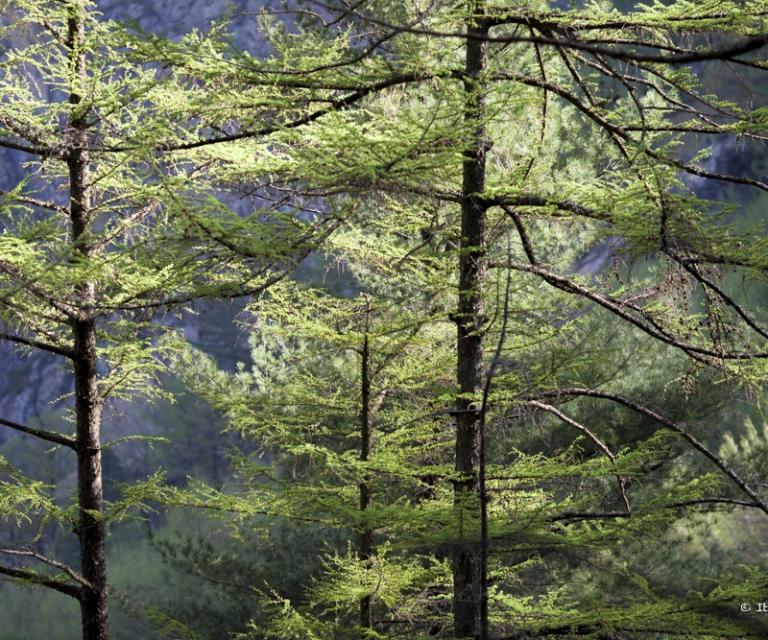arbre 3_10