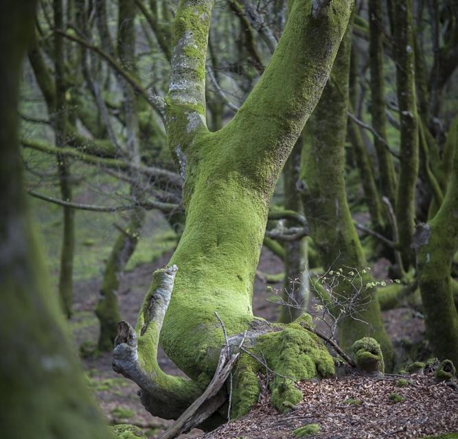 arbre 3_11