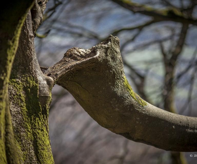 arbre 3_12