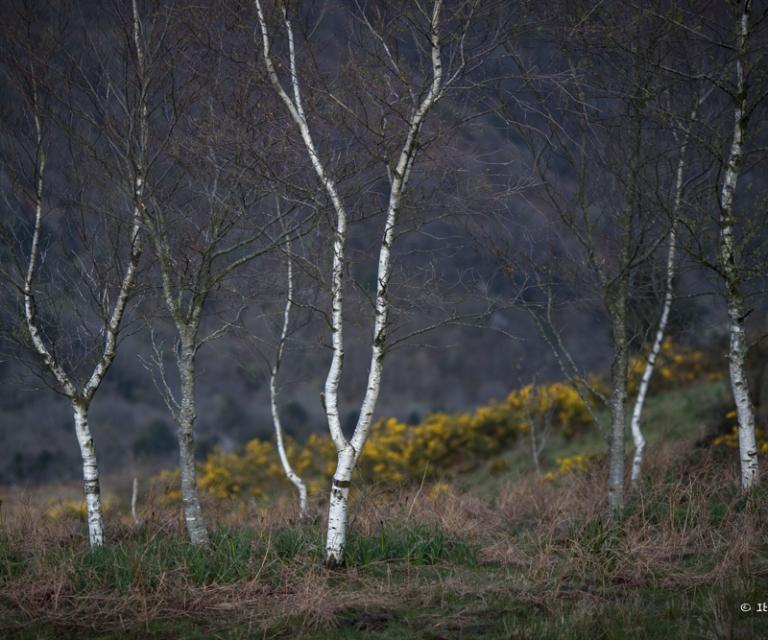 arbre 3_13