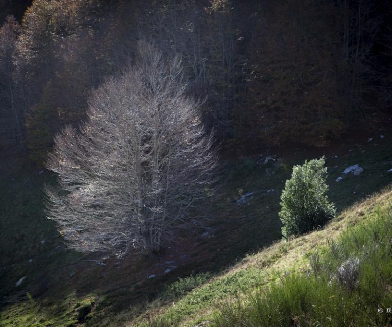 arbre 3_15