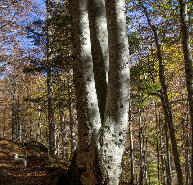 arbre 3_16
