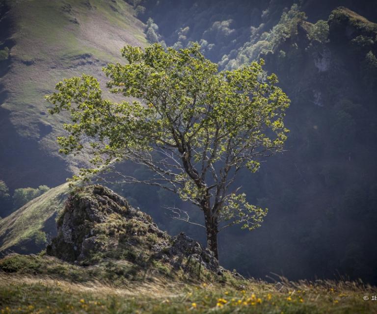 arbre 3_21