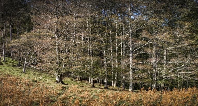 arbre 3_22