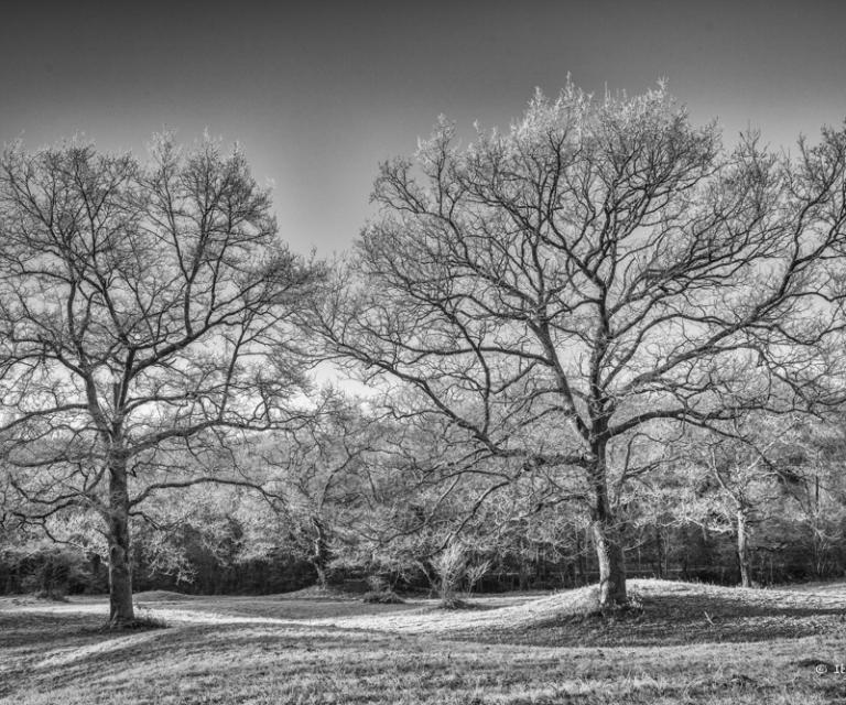 arbre 3_25