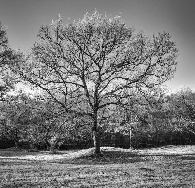 arbre 3_27