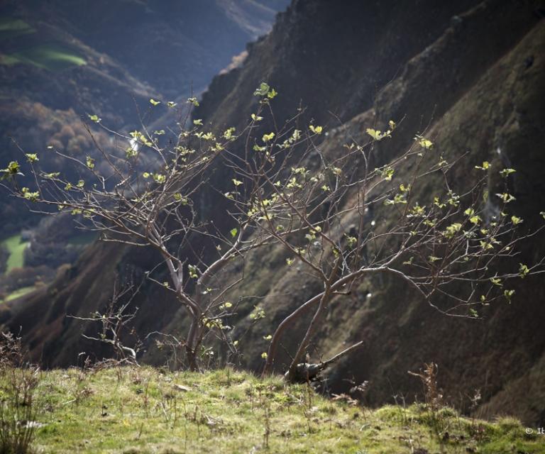 arbre 3_28