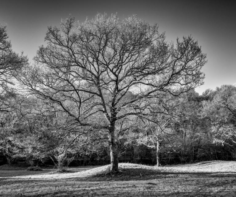 arbre 3_29