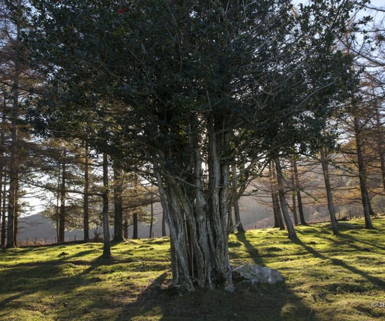 arbre 3_31