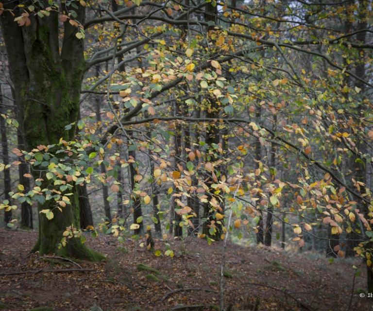 arbre 3_32