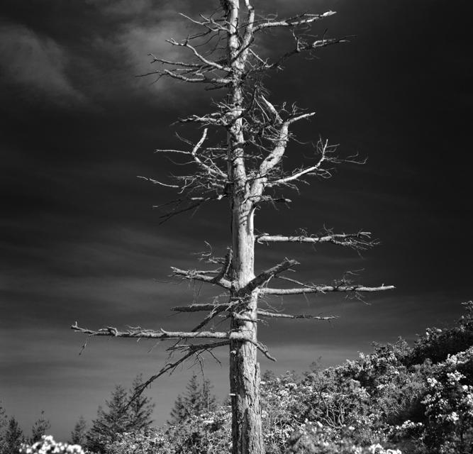 arbre 3_33