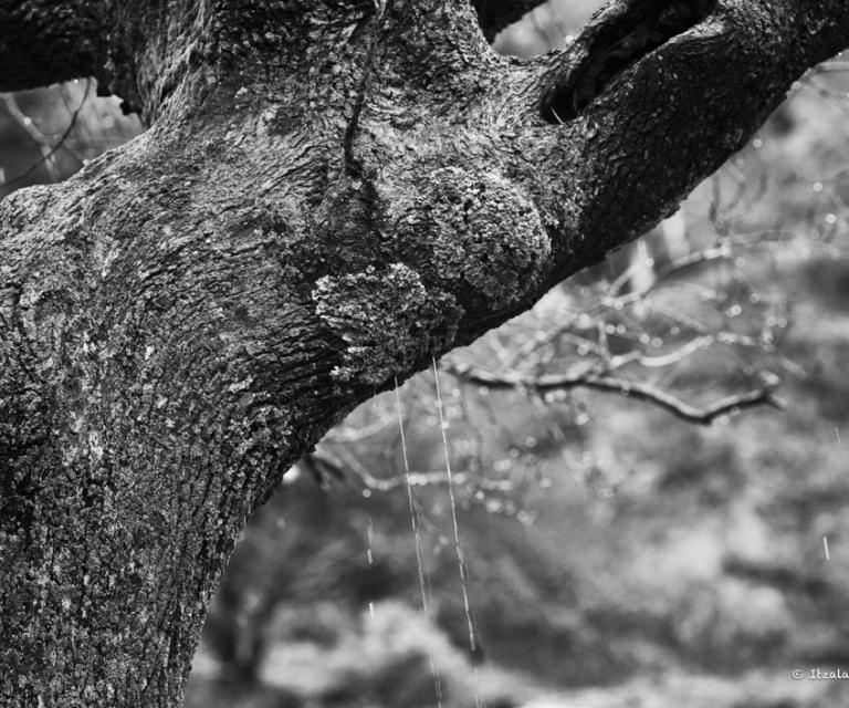 arbre 3_34