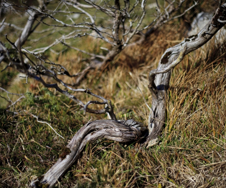 arbre 3_36