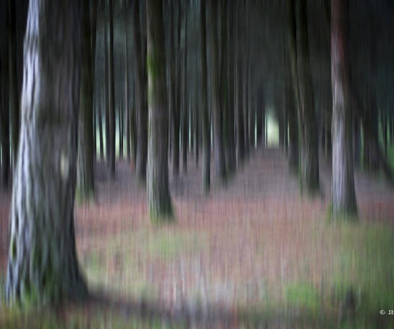 arbre 3_37