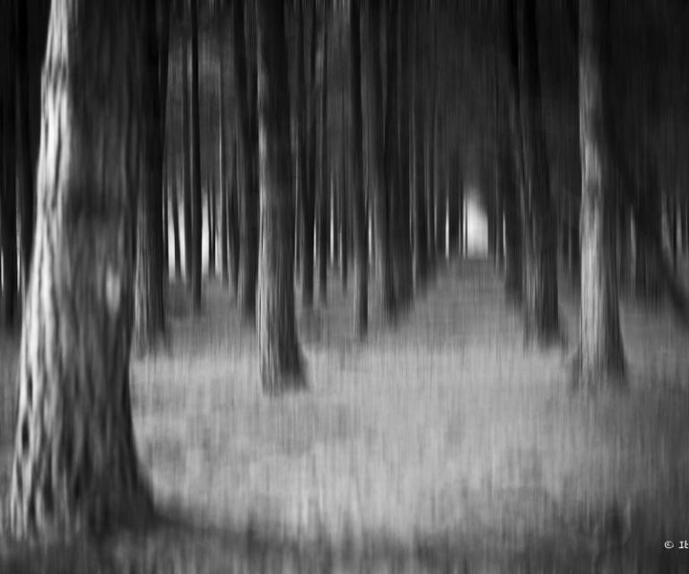 arbre 3_38