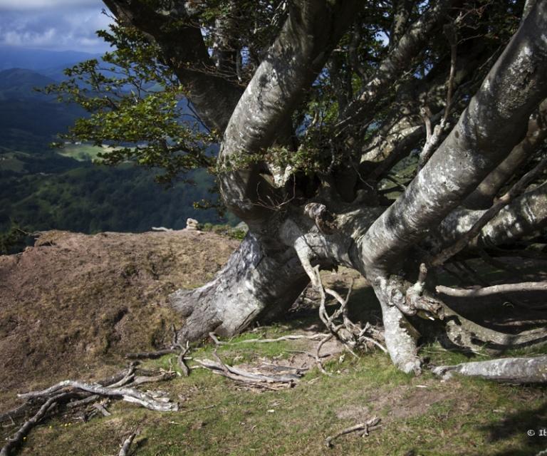 arbre 3_39