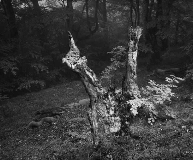 arbre 3_41
