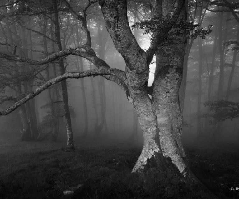 arbre 3_42