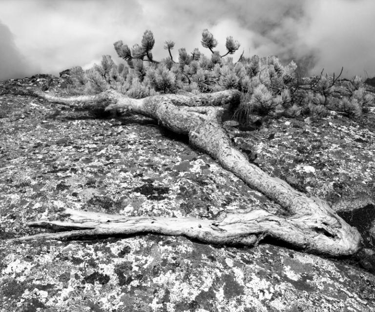 arbre 3_46