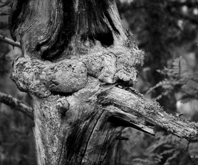 arbre 3_47