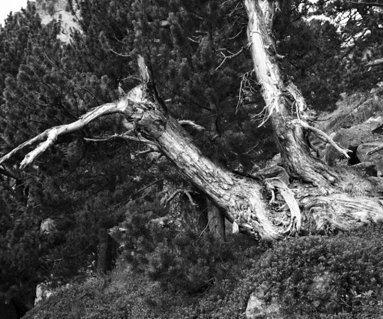 arbre 3_48