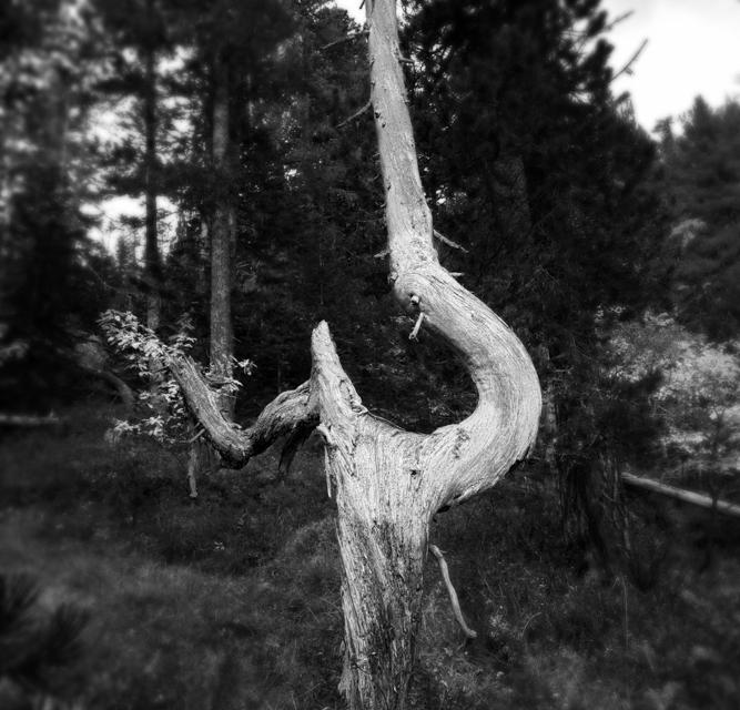 arbre 3_49