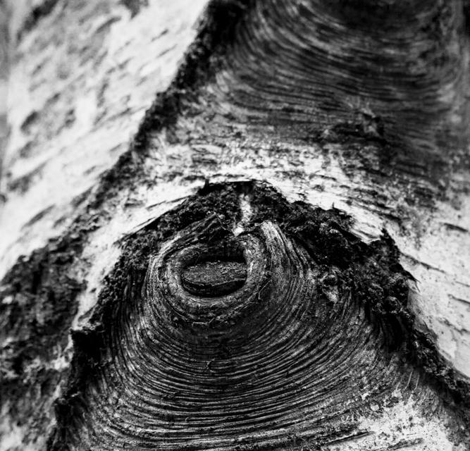 arbre 3_50