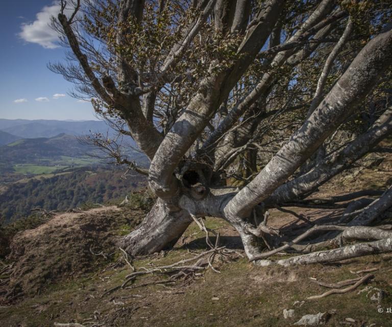 arbre 3_8