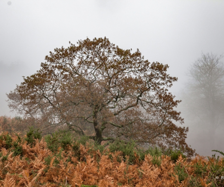 arbre 3_9