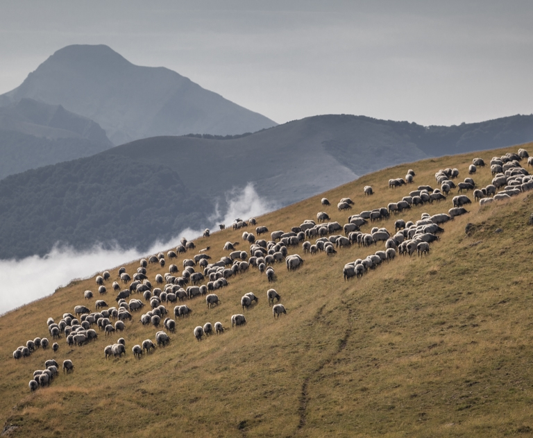 Pays basque 4_25