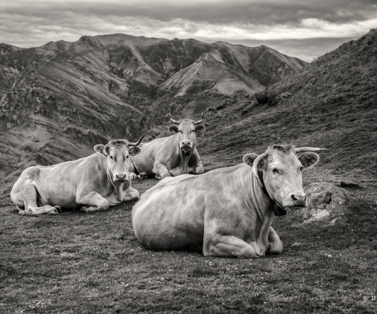 Pays basque 4_34