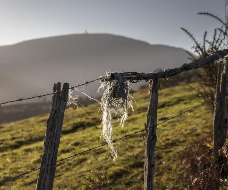 Pays basque 4_42