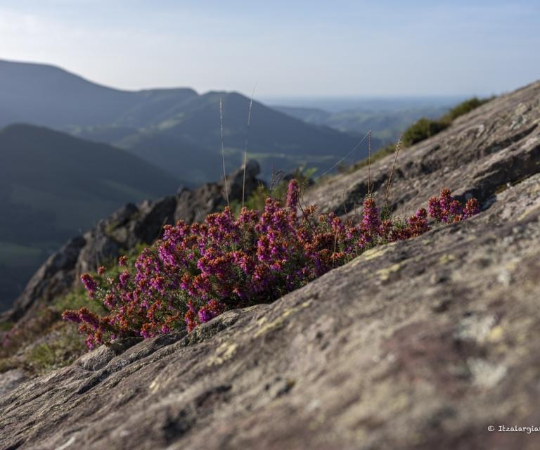 Pays basque 5_1