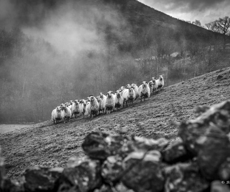 Pays basque 6_2